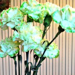 Make your own Green Carnations!